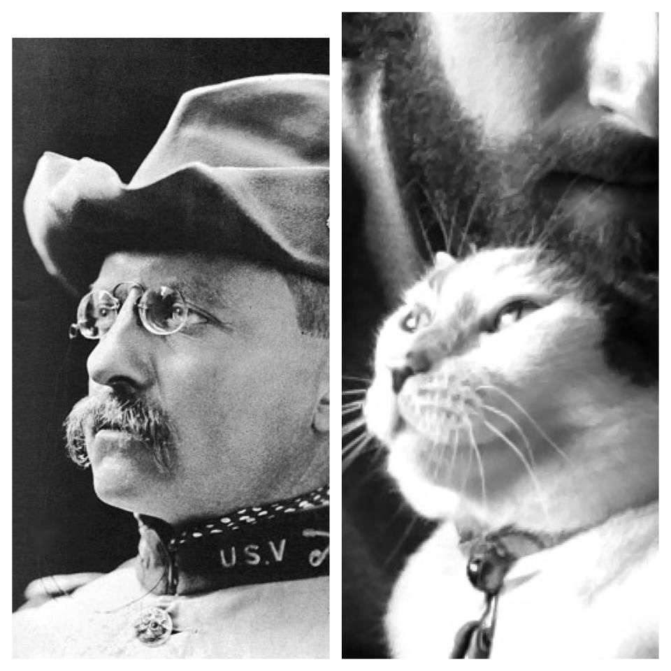 Teddy Roosevelt Cat