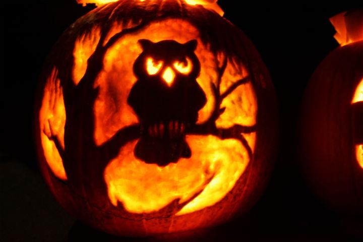 Owl jack-o-lantern ~ ElephantEats.com