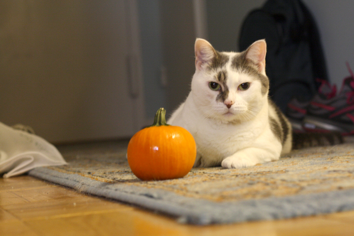 LC and a pumpkin ~ ElephantEats.com
